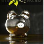 natchat-investir-v-akcii