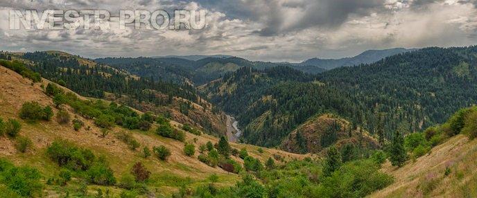 инвестиции в лес